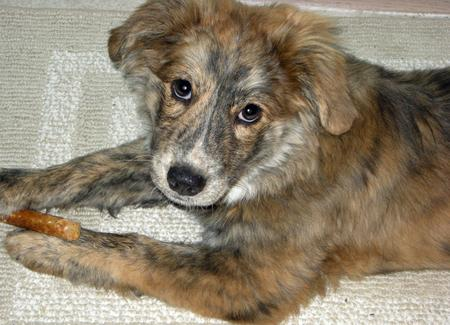 taylor-the-mixed-breed-2_62802_2011-12-09_w450